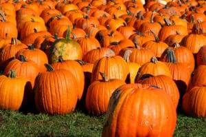 pumpkins(1)