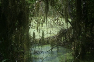 a-real-swampland-in-florida-1374930